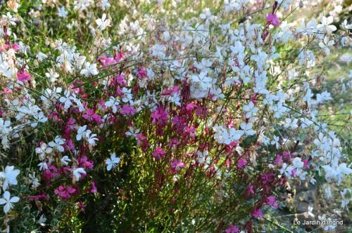 jardin,puces Lasmonzie,asters 029.JPG