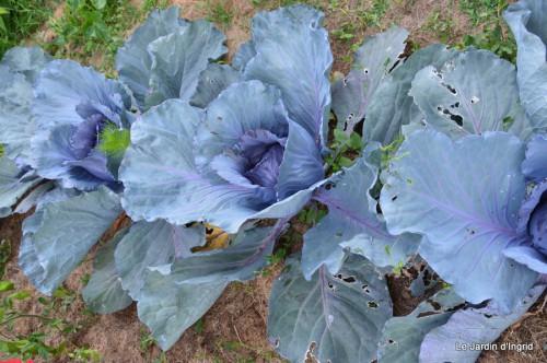 jardin,chez Bernadette,libellules,bouquets de mariée 092.JPG
