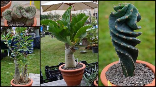 2014-10-06 jardin,St Avit Seigneur brocante,Neuvic fête des plantes.jpg