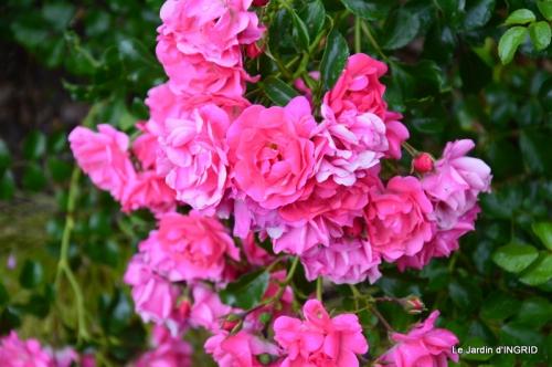 fleurs,roses,le cygne,les pts fruits 141.JPG