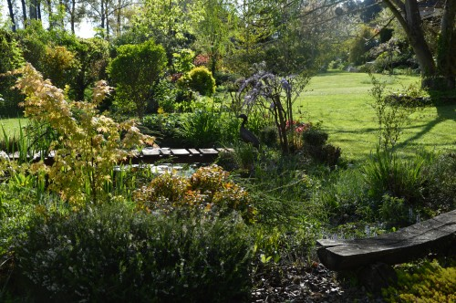 iris,arbre de judée,pivoine,Arya,viburnum,pts plants,cytise,akéb 018.JPG