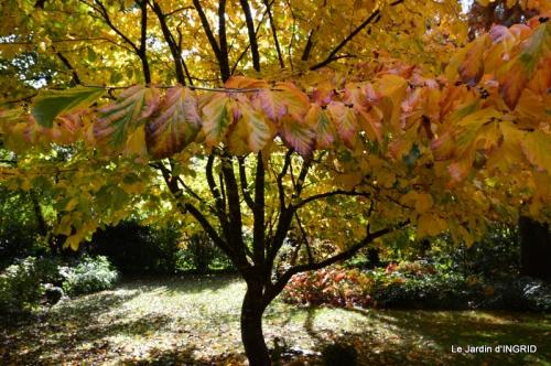 les arbres en automne,cabane 082.JPG