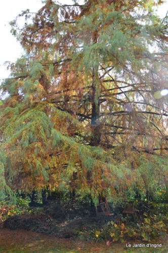 automne,arbres,inondation 097.JPG