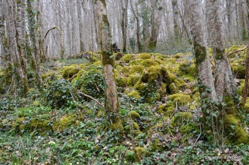 les jonquilles des bois 043.jpg