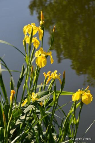canal,iris,marguerite,ancolies,brocante Beaumont,oeufs de Paques 014.JPG