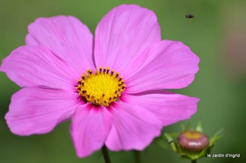 coeur des fleurs,papillons,libellules 159.JPG