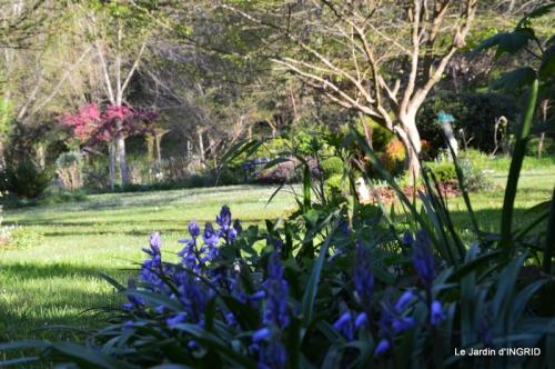 Bergerac, jardin ,arbres fruitiers,printemps 056.JPG