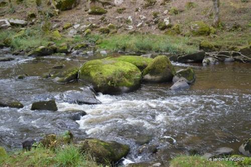 la Sedelle,étang de Riault,cyclamens 072.jpg