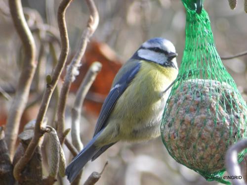 oiseaux ,lutins,buse 023.JPG