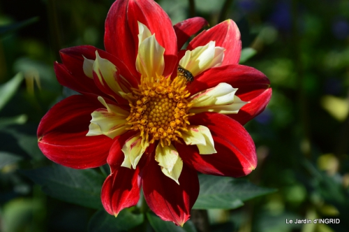 confiture,bouquet,petit jardin 021.JPG
