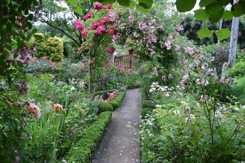 jardin,potager,roses,sauges 008.JPG