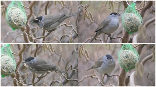 2013-02-24 les oiseaux sur terrasse.jpg