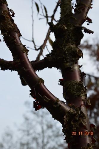 arbres,vues,kaki,kiwi,fleurettes,en fâce 004.JPG