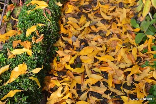 canal,automne,tonte des feuilles 025.JPG