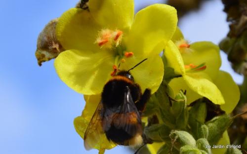 automne jardin,la rue,abeilles,les p filles 009.JPG