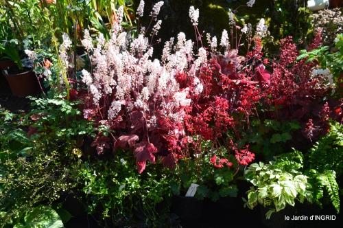 coquelicots,fête des fleurs Lalinde,fouleix,jardinage 103.JPG