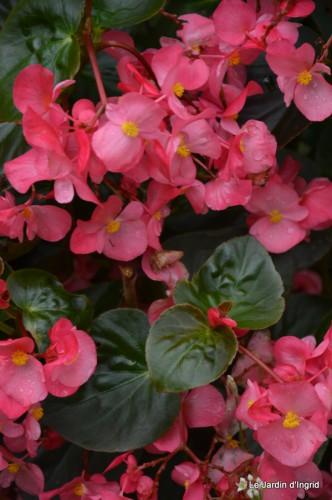 après la pluie,Tuillères,Mne Peirichou fleurs 040.JPG