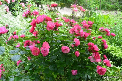 les roses au jardin 026.JPG