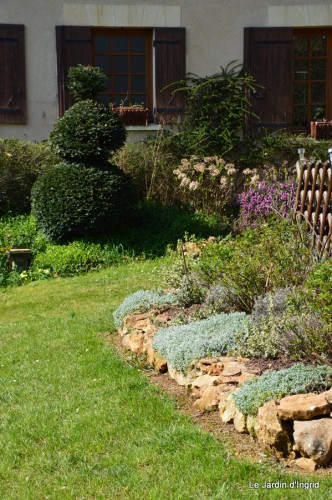 araignée,vues jardin,cygnes,insecte 056.JPG