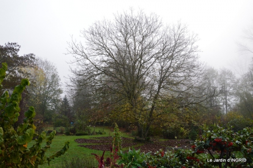 kakis,dernières fleurs,pt jardin,Julie,bassin 001.JPG