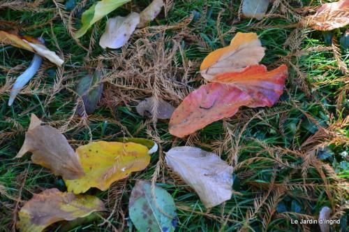 dernières automne,givre,chat 072.JPG