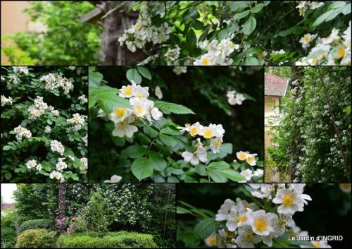 2015-05-16 maison,jardin Bernadette,et jardin Claudine1.jpg