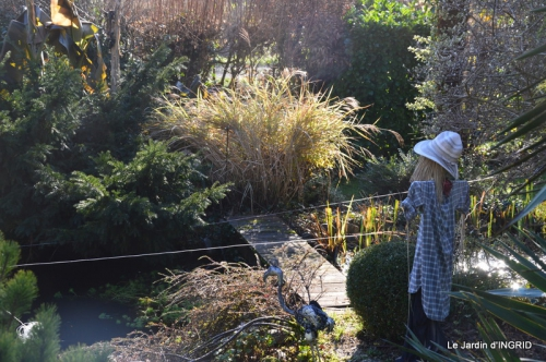 oiseaux,travaux,arbustes,les dernières fleurs 033.JPG