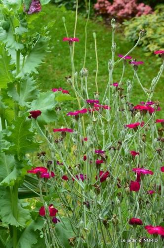 bouquet champêtre,jardin,hémérocalles,nénuphards 065.JPG