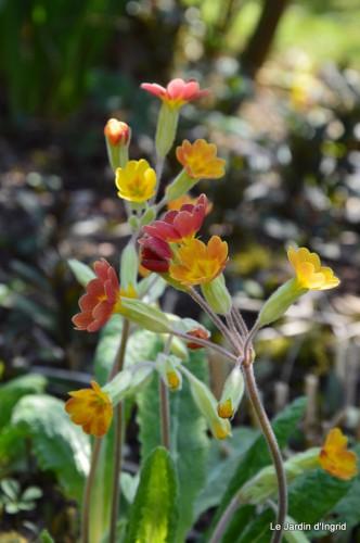 araignée,vues jardin,cygnes,insecte 060.JPG