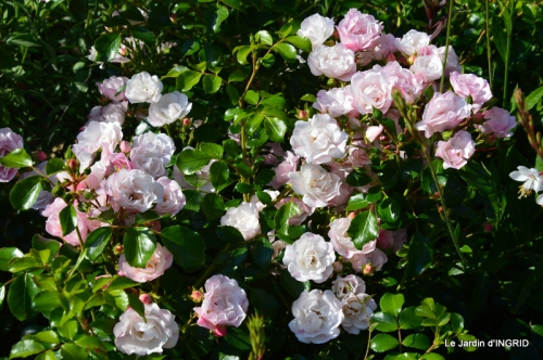 fleurs,roses,le cygne,les pts fruits 018.JPG