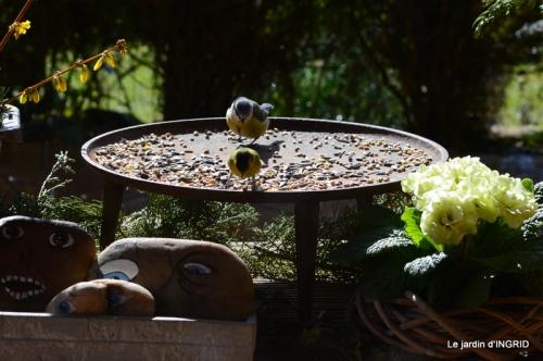vue sur la terrasse,crocus,oiseaux, 056.JPG