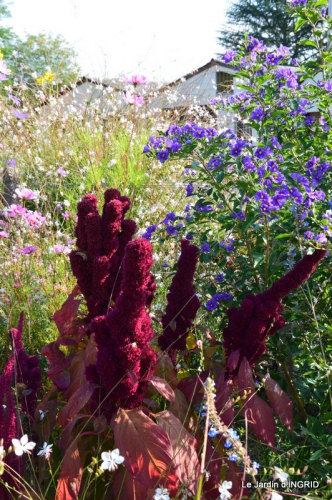 jardin Mme Perichou,grandes fleurs,bouquet,jardin 011.JPG