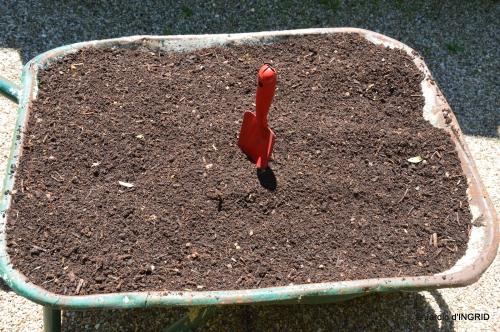 potager,chenille,pour le 18 juin,tour du jardin 094.JPG