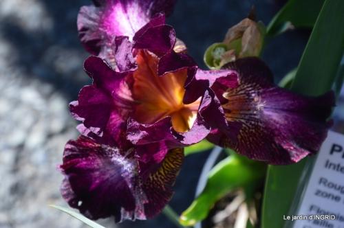 muguet,féte des fleurs Lalinde,jardin 083.JPG