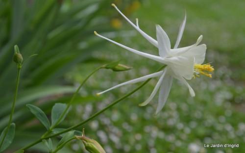 fleurs Beaumont,bouquet,tableau,serre,plants 006.JPG