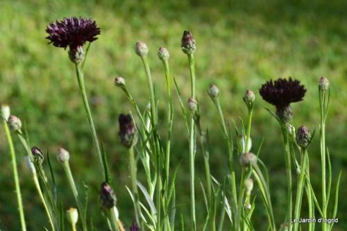 jachère,couleur,bouquet 021.JPG
