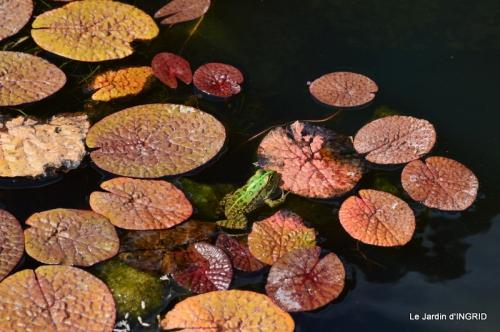 les jardins d'eau de Carsac 158.JPG