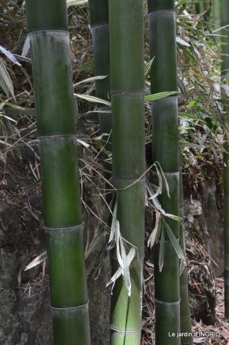 bambous Roque Gageac,jardin,bouquet 169.JPG