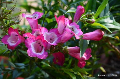 oiseaux,travaux,arbustes,les dernières fleurs 081.JPG