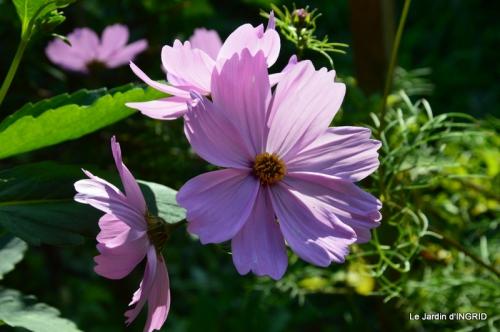 jardin Mme Perichou,grandes fleurs,bouquet,jardin 061.JPG