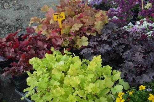 chateau  Banes,marché fleurs Lalinde 024.JPG