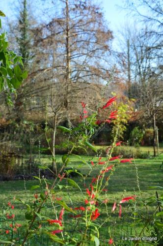 train,nid frelons,couleur jardin 043.JPG
