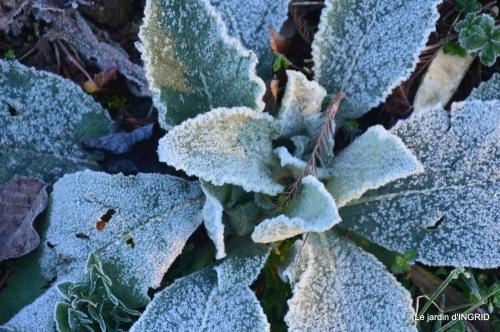 première gelée,compositions florales à garder,jardin 035-001.JPG