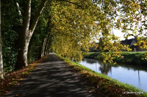 sauges,plectanthrus,Romane,canal,manthe r.,automne 043.JPG