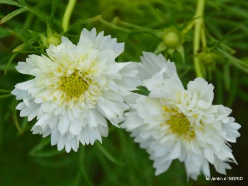 Ines,jardin,lagestromia,brocante Lalinde 119.JPG
