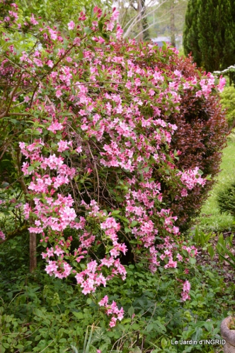 jardin avril 077.JPG