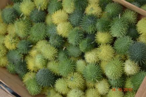 champignons,citrouilles,st Mayme de Péreyrol,fuschias,jardin aut 075.JPG
