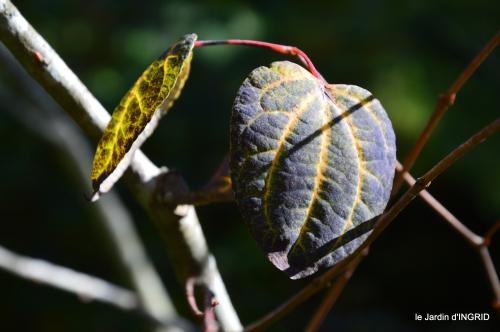 jardin automne,voisinage,canal 143.JPG