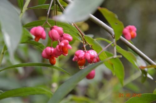 automne,troc2012,Mouleydier,serre 032.JPG
