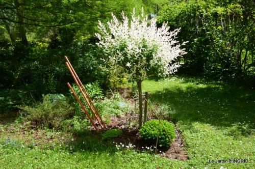 jardin avril 097.JPG